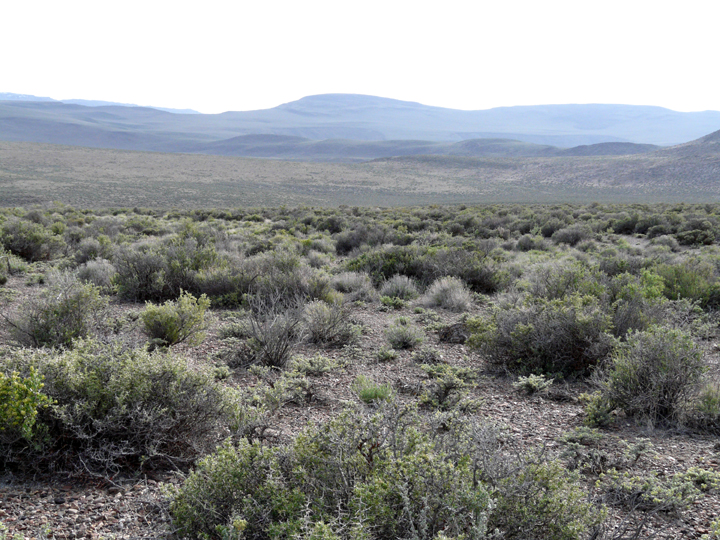 Scattered sagebrush stretches far over rolling hills into the distance.